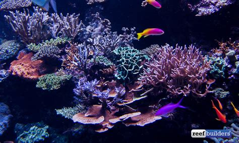 sea reef aquarium tank of s e a aquarium s reef display featured reefs marquee