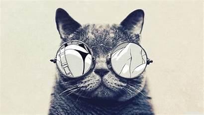 Jazz Hip Screen Cat