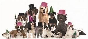DOG PARTY & PARADE PER IL SOCIALE Giardini & Terrazzi