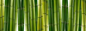 Wie Schnell Wächst Bambus : bambus f r kreative m bel m bellexikon ~ Frokenaadalensverden.com Haus und Dekorationen
