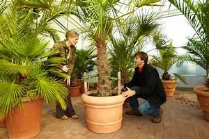 Winterharte Pflanzen Für Balkon : nicht alle k belpflanzen sind winterhart diy academy ~ Somuchworld.com Haus und Dekorationen