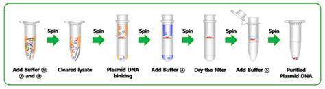accuprep plasmid mini extraction kit