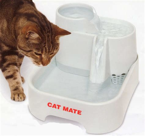 how do cats mate our honest product review on the cat mate pet fountain