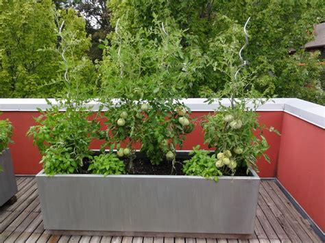 Grow Great Tomatoes Using Container Gardening Methods