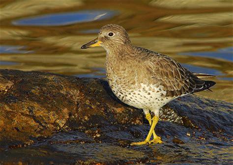 fauna bc birds