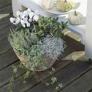 Balkonbepflanzung Im Herbst : die besten 25 pflanzschale ideen auf pinterest alte reifenpflanzer gartenschlauch und ~ Markanthonyermac.com Haus und Dekorationen
