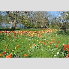 Botaniska Trädgården (lund) Wikipedia