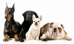 razze di cani il Cane Alla scoperta delle razze di cani
