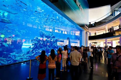 underwater zoo and aquarium in the world s largest shopping mall dubai