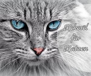 Verkleidung Für Katzen : kokos l f r katzen ~ Frokenaadalensverden.com Haus und Dekorationen