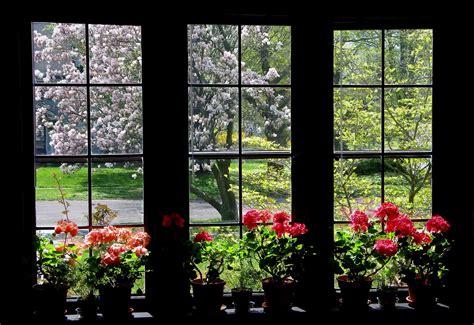 stan spring window todays flowers