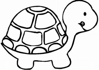 Preschool Coloring Printable Pages Turtle