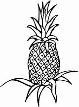 Pineapple Coloring Fruit sketch template