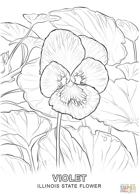 illinois state flower coloring page  printable
