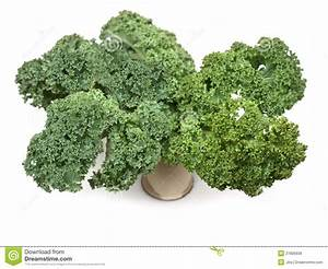 Curly Kale Leaves Royalty Free Stock Images - Image: 27806939