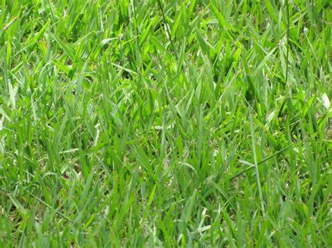 The 5 Best Grass Types For Tallahassee, Fl Lawns