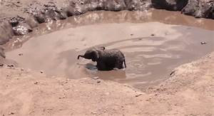 Baby Elephant Rescued From Mud