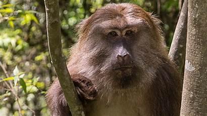 Monkey Monkeys Primate Animals Meaning Types Face