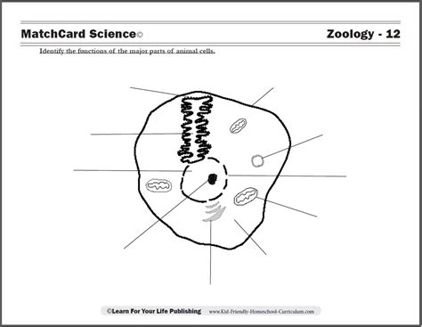 plant and animal cell worksheets for 4th grade 4th grade worksheets on plant and animal cells