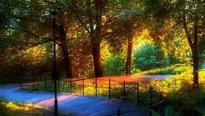 Rainbow, On, Autumn, Trees, Hd, Rainbow, Wallpapers