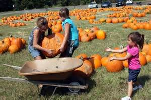 Mandarin Pumpkin Patch Jacksonville Fl by Pumpkin Patch Fall Tradition Returns To Ponte Vedra Beach