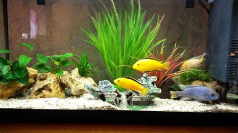 poisson pour aquarium eau douce 100 l