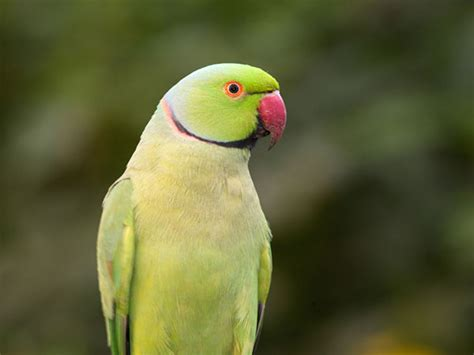 The Best Talking Pet Birds For Bird Lovers Boldskycom