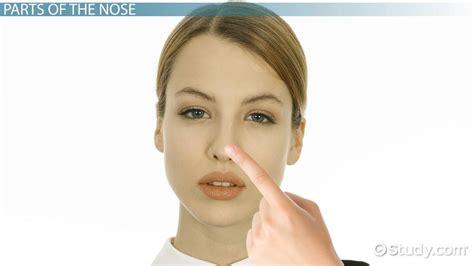 nose lesson  kids facts parts video lesson