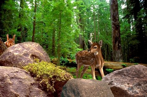 Forest Animal Live Wallpaper - free images tree nature forest wilderness trail