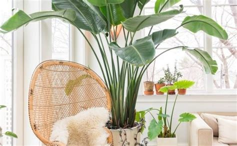 moving tips   move plants    home good