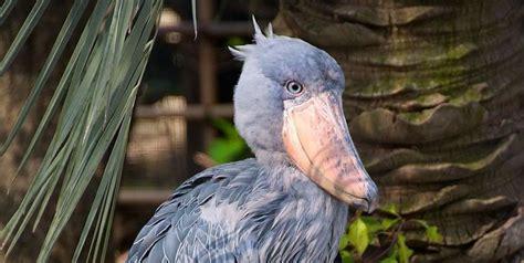 The 25 Weirdest Birds Strange Birds