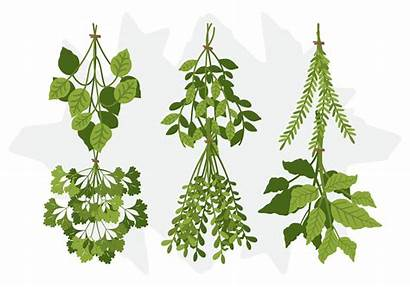 Herb Herbs Icons Spices Graphics Cannypic Vetor