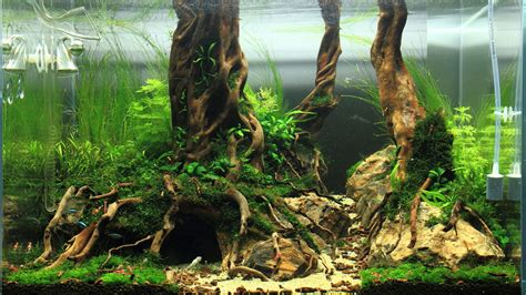 aquascaping with driftwood these custom aquariums with underwater trees will