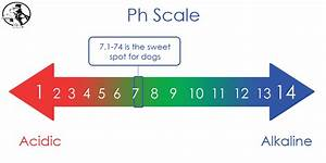 Why Ph Balance In Dogs Is Important To Their Health