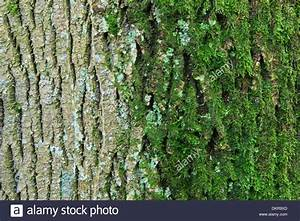 what is a tree trunk covered with 4 letterswhat is a tree With what is a tree trunk covered with 4 letters
