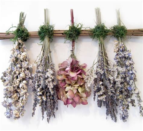 fiori secchi ortensie fiori secchi ortensie fiori secchi seccare le ortensie