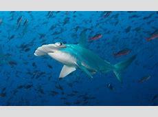 Scuba Diving in Galapagos Islands, Ecuador Dive The