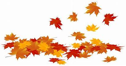 Leaves Autumn Fall Leaf Clip Fallen Maple
