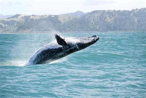 Job Whale Done! Crew Removes Massive Debris From Ocean