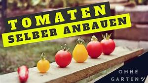 Tomaten Selber Anbauen : tomaten ohne garten einfach selber anbauen anpflanzen max green youtube ~ Orissabook.com Haus und Dekorationen