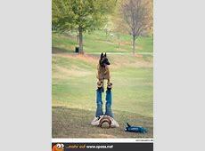Yoga mit Hund Lustige Bilder auf Spassnet