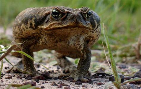 si鑒e crapaud symbolique de la grenouille et du crapaud