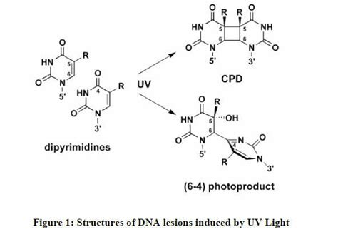 Oxiselect Uv-induced Dna Damage (cpd / 6-4pp Quantitation