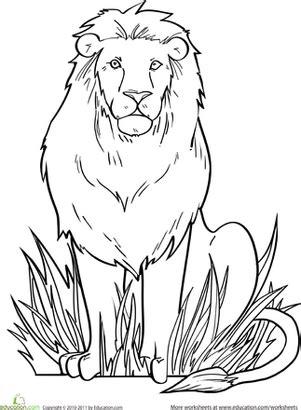 lion worksheet educationcom