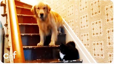 Dog Afraid Of You Shall Not P Cat Furry Gandalf