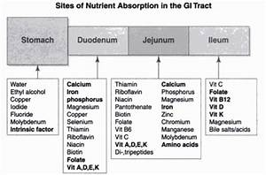 Site Of Absorption Of Vitamins  Minerals And Nutrients