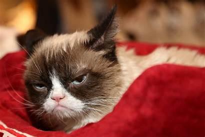 Grumpy Cat Meme Memes Definition Britannica Copyright