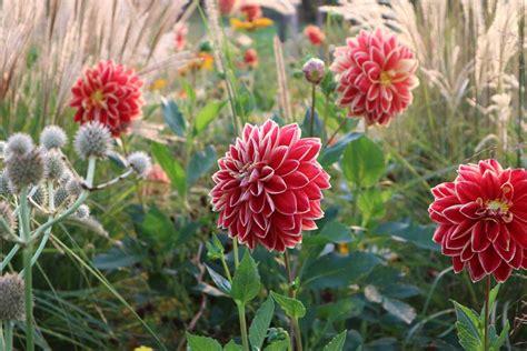 Britzer Garten De by Britzer Garten Entspannt Durch Das Herbstliche Berlin
