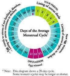menstruation    calculate menstrual cycle length