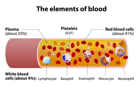 Whole Blood Cells Components